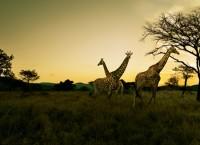 私を南アフリカに連れて行って!」メッセージコンテストを開始