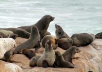 野生のオットセイが生息する ドイカー島