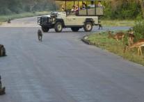 野生動物や自然界に精通したプロフェッショナル レンジャー