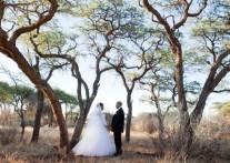 世界各国の新婚カップルを魅了 ブッシュ・ウェディング