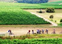 ぶとう畑を駆け抜ける ケープ・ワインランドでのバイク&ワインツアー