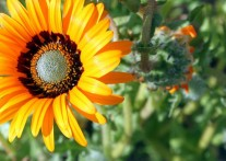春先、オレンジ色に染まるナマクワ国立公園
