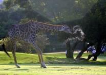 ゴルフしながらサファリ