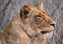 サビサンド私営動物保護区
