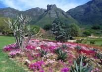 テーブルマウンテンの麓に位置する花のワンダーランド 「カーステンボッシュ植物公園」