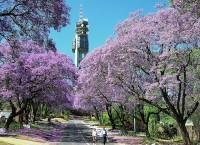 南アフリカ観光局ウェブサイト、旅行会社応援ページ