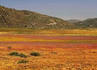 南アフリカ観光局2011年9月の渡航者数を発表