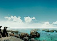 ズマ大統領、2012年の南アフリカへの年間渡航者数が10.2%増を記録と発表