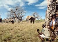 「ワールド・トラベル・アワード」世界最優秀賞に南アフリカ勢が選出