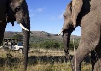 ゾウ好きにはたまらない『アドゥー・エレファント国立公園』