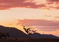 世界一の動物保護区『クルーガー国立公園』