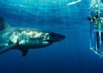マリーンサファリでサメに大接近!!『シャーク・アレイ』
