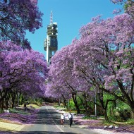 南アフリカ観光局 2017年7月の旅行者数を発表