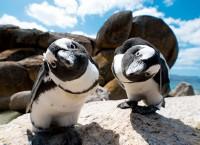 南アフリカ観光局 2018年4月の旅行者数を発表