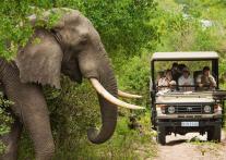 世界一の動物保護区 『クルーガー国立公園』