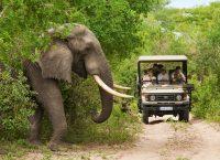 南アフリカ観光局 2018年11月の旅行者数を発表