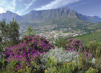 南アフリカ観光局 2018年12月の旅行者数を発表